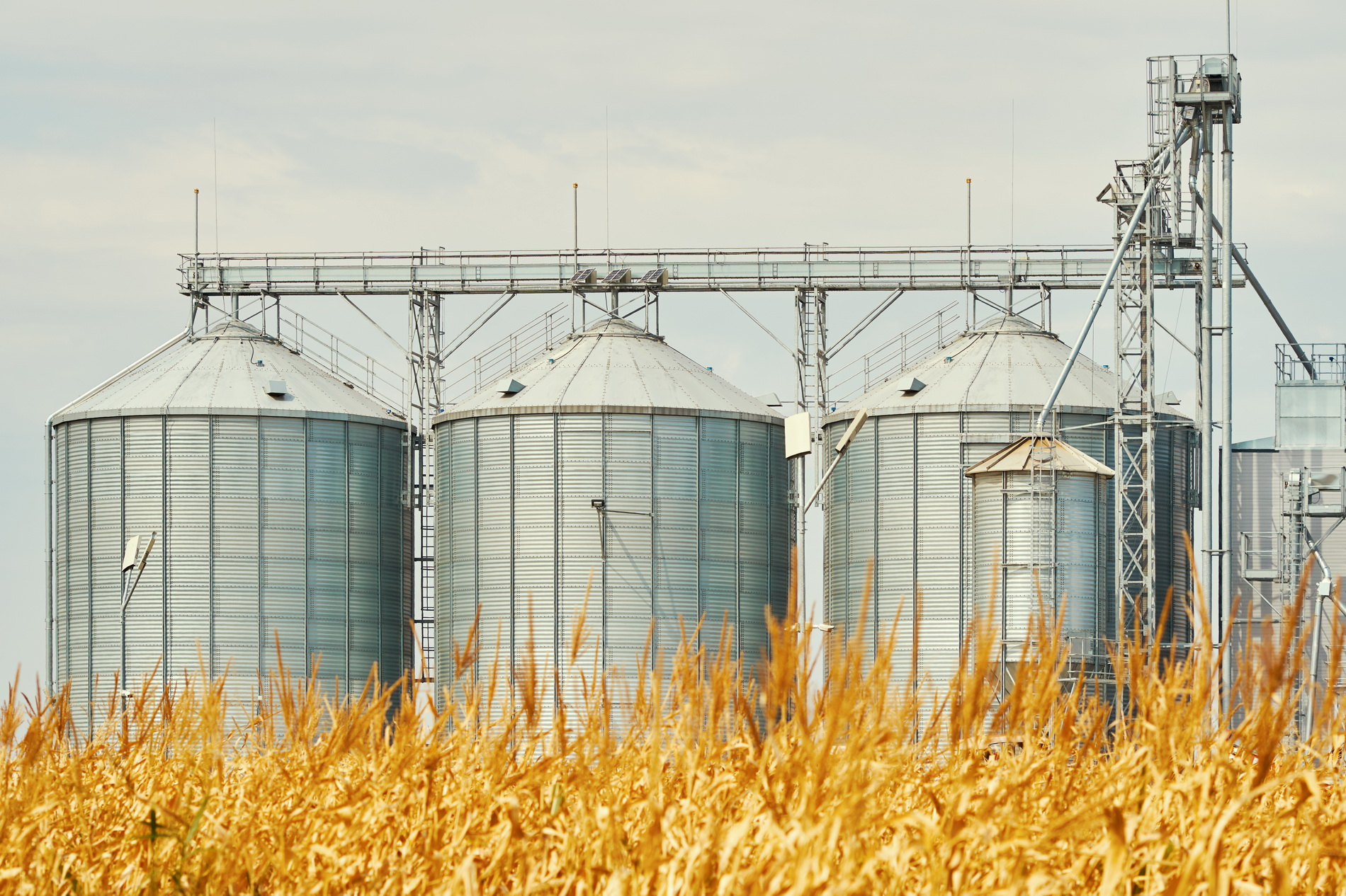 Grain prices, markets and analysis